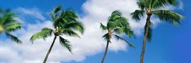 Sprachen lernen unter Palmen